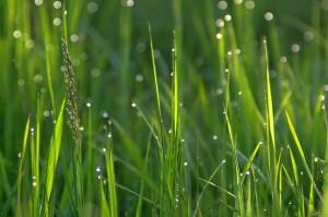 grass-1369144_640